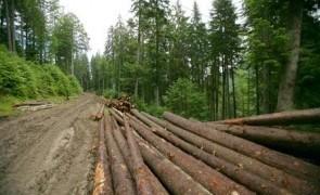 padure lemne defrisari