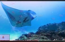 google ocean explore 1