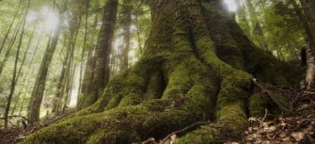 Tabăra Greenpeace din munții Făgăraș s-a încheiat