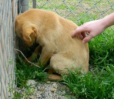 ÎNCHISOARE pentru violență împotriva animalelor: Pedepse de până la ȘAPTE ani