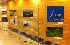 expozitie foto