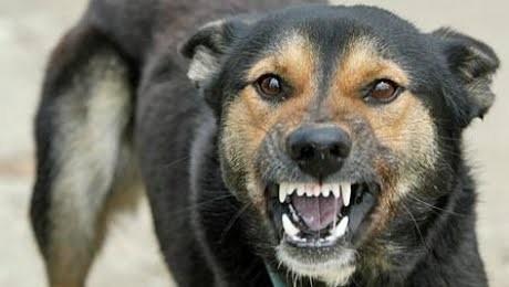 CCR, decizie crucială pentru sănătatea publică: Cum trebuie să fie gestionați câinii fără stăpân