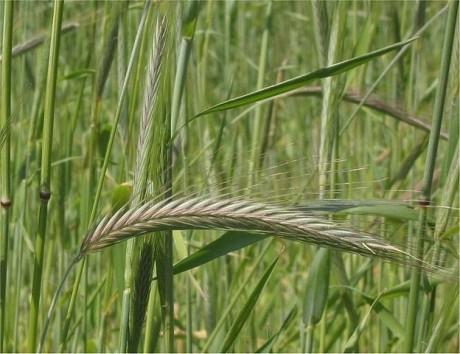 Date OFICIALE - România, în TOP TREI exportatori de cereale din Uniunea Europeană