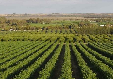 Tehnologia a schimbat agricultura și atrage noi tipuri de investitori