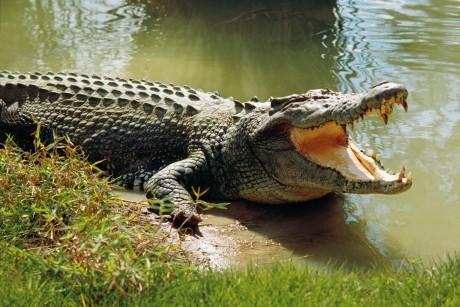 IMAGINI ȘOCANTE cu crocodili uciși în mod violent pentru poșete Louis Vuitton, făcute publice de PETA
