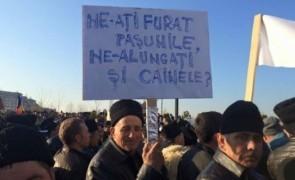 protest ciobani