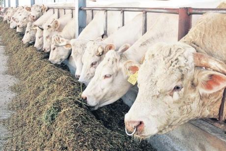 ANSVSA: 'Fermierii trebuie să asigure animalelor adăpost corespunzător, apă şi hrană suficiente în condiţii de iarnă severă'