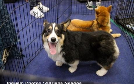 Parlamentari PSD vor să oblige primăriile să facă adăposturi pentru câini și pisici