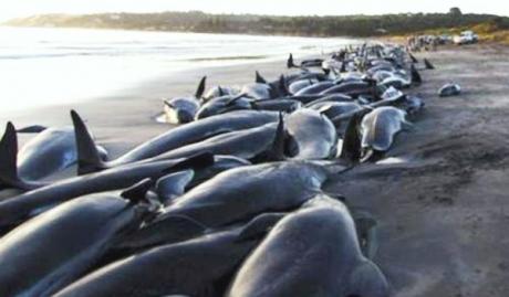 PSD - un grup de balene sinucigașe?!