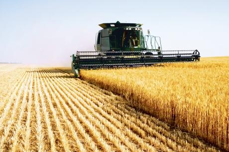 Se anunţă scumpirea pâinii. Preţul grâului creşte puternic pe fondul secetei din Europa