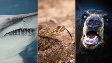 Cel mai norocos om: A scăpat cu viaţă după ce a fost muşcat de un rechin, un urs şi un şarpe (FOTO)