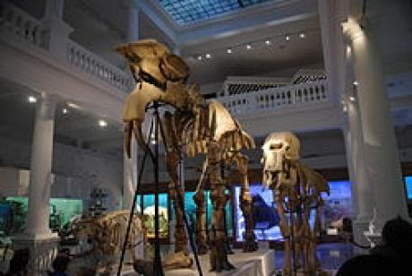 Muzeul Antipa va fi deschis înaintea Paştelui şi de 1 mai