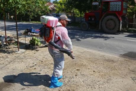 Autoritățile sunt în ALERTĂ Focar de pestă porcină, lângă București: Virusul a fost confirmat în localitatea Tunari