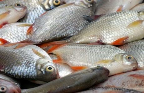 Operațiune specială a Protecției Consumatorilor la vânzătorii de pește înainte de Florii