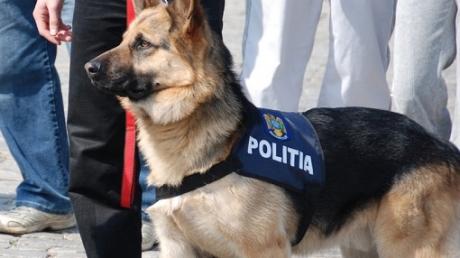 Directorul Clubului Câinilor Utilitari: 'Noua lege privind pensionarea animalelor de serviciu este binevenită'